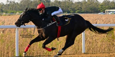 R6 Yvette Bremner Lyle Hewitson Highland Hero- 21 June 2019-Fairview Racecourse-1-PHP_7511
