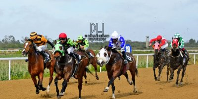 Fairview Racecourse - R7 Five Star Racing Collen Storey The Greek Soldier01 November 2019-1-PHP_6451