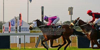 R7 Gavin Smith Muzi Yeni Paper Town- 31 May 2019-Fairview Racecourse-PHP_1315