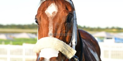 R8 Alan Greeff Greg Cheyne Delia's Delight- 11 May 2019-Fairview Racecourse-PHP_9604