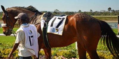 -Fairview Racecourse-Algoa Cup Social Images- Sponsored Saddle Cloths -27 October 2019-1-DSC_0264