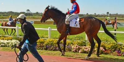 -Fairview Racecourse-Algoa Cup Social Images- Sponsored Saddle Cloths -27 October 2019-1-DSC_0265