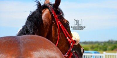 R2 Sharon Kotzen MJ Byleveld Tarzan-Fairview Racecourse -17 December 2019-1-PHP_3780