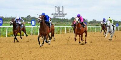 R8 Alan Greeff Greg Cheyne Verbarium-Fairview Racecourse -30 December 2019-1-PHP_7466