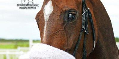 R4 Alan Greeff Teaque Gould Fools Garden-Fairview Racecourse-28 FEB 2020-1-PHP_5799