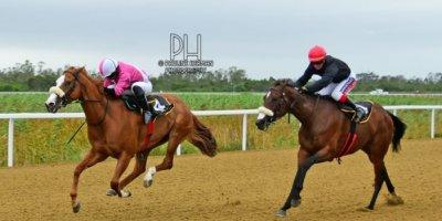 R6 Alan Greeff Eldin Webber Forehand-Fairview Racecourse-7 FEB 2020-1-PHP_2649
